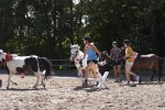 Pony Spring-Quadrille